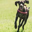 Pettorina Outdoor Hurtta - Colore Ciliegia 90 cm per cani