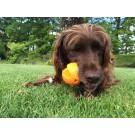 Gioco attivazione mentale Mystery Ball per cani