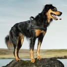 Pettorina nylon OUTDOOR HURTTA Nera per cani