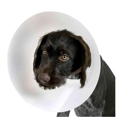 Presidio medico Collare Elisabettiano per cani