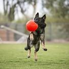 Pallone da calcio, non si sgonfia ARANCIONE per cani