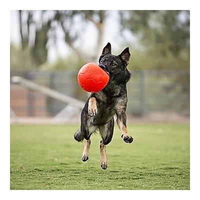 Pallina da calcio Grande, non si sgonfia ARANCIONE per cani