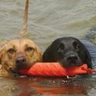 Dummy da riporto per retrievers KONG. galleggiante per cani