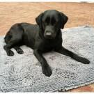 Tappetino microfibra super assorbente 45 x 61 cm per cani
