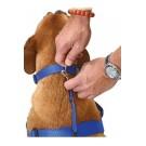Pettorina Educativa WAGGWALKER per cani