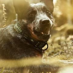 Collare neoprene outdoor Ginepro Hurtta  per cani