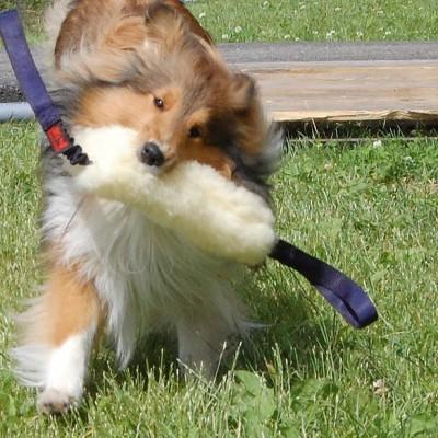 Salamotto pelo pecora doppia impugnatura bungee per cani