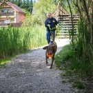 Pettorina Mantrailing JULIUS K9 per cani