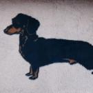 Vet Bed tappeto antiscivolo Bassotto per cani