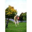 Gioco da lancio Chuckit Flying Squirrel per cani