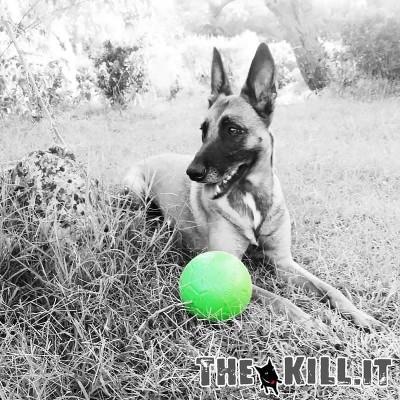 Pallone da calcio, non si sgonfia, Diam. 15 cm. per cani