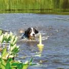 Aqua Toy MOT®-Aqua Trixie per cani