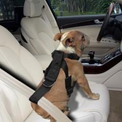 Pettorina di sicurezza per viaggi in auto per cani
