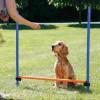 Salto singolo per agility dog Trixie