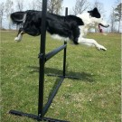 Salto aperto per Obedience per cani