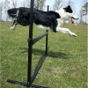 Salto aperto per Obedience